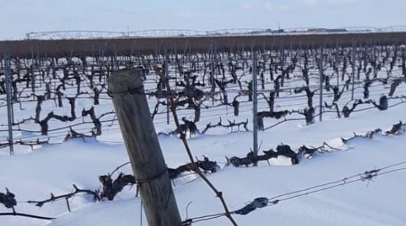 """Bellos paisajes en los viñedos ¿""""Año de nieves año de bienes""""?"""